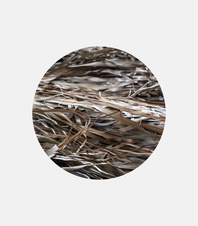 fun palm leptomereia tropiko kalymma